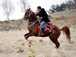 Filmlerde rol alan atlar buradan geliyor