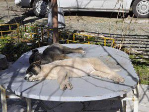 Köpekleri için suç duyurusunda bulundu