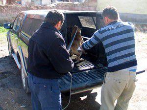 Köpek barınağa teslim edildi