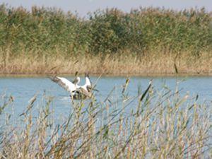 Beyşehir gölünün sonbahar konukları
