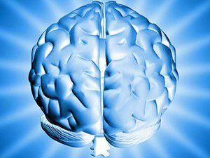 Bilimadamları insan beynini inceledi