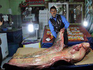 Gölde 100 kiloluk dev balık yakalandı