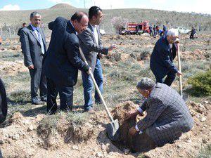 Ereğlide 10 bin fidan daha toprakla buluştu