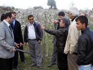 Çiftçilere uygulamalı ağaç budama eğitimi verildi