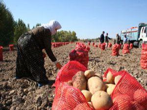 Beyşehirde patates üretimi artıyor