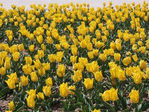 Karatayda bahar çiçekleri