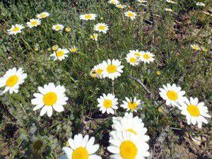 Anamasa bahar geldi
