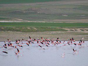 Flamingolar Düden Gölünde
