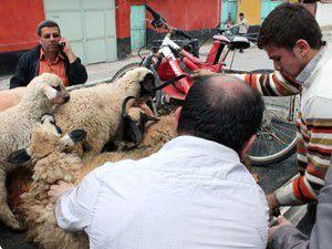 4 kişi çalıntı hayvanlarla birlikte yakalandı