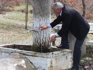 Meşe ağacının gövdesi çeşme hizmeti veriyor
