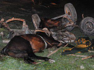 Konyada kamyonet at arabasına çarptı: 3 yaralı