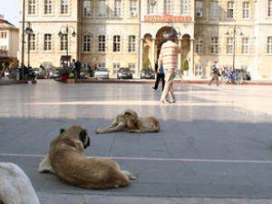 Köpekler dinlenmek için Valiliği seçti