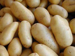 Patates yeni sahibini arıyor