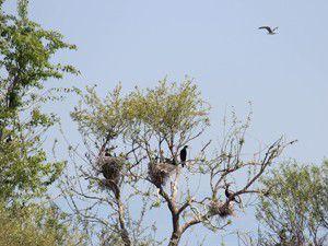 Yavrular mekanı kuş cenneti haline dönüştürdü