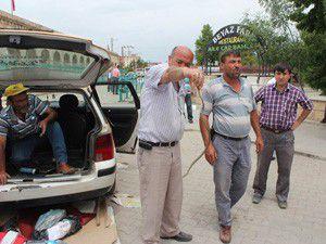Beyşehirde taksideki yılan paniğe neden oldu