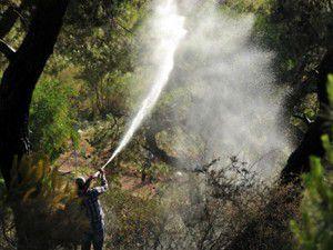 Manisa ve Bodrumda orman yangını