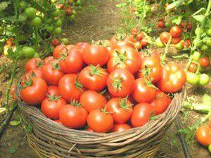 Tarım ürünleri ihracatı arttı