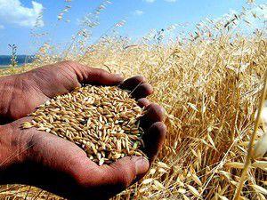 Kaleliden buğday taban fiyatı değerlendirmesi