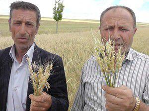 Ekili arazilerde zarar meydana geldi.
