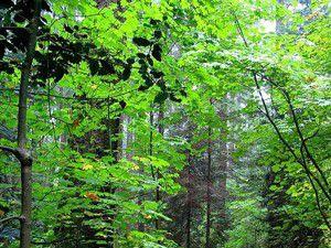 10 yılda 10 milyon ağaç toprakla buluşturuldu