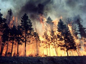 Konyada orman yangını tatbikatı yapıldı
