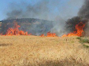 Konyada buğday ekili alan yandı