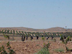 Suriye sınırında bir kaçakçı öldü