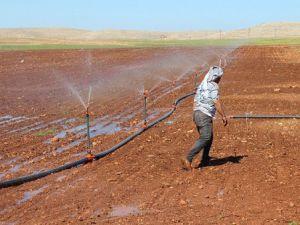 Güneydoğuda toplulaştırma arazi fiyatlarını artıracak
