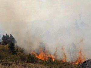 Seydişehirde 5 hektarlık orman yangında zarar gördü