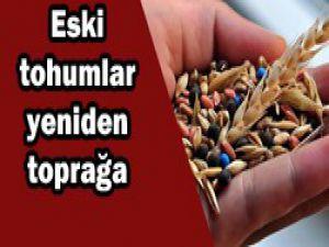 Yerli tohumlar yeniden toprağa