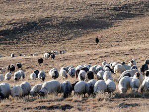 Ermeni askerleri Türk çobanı öldürdü