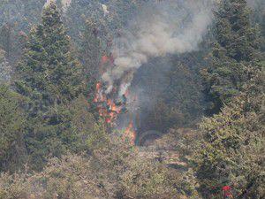Konyada orman yangını