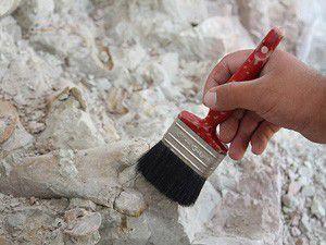 Çankırıda antilop fosili bulundu