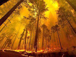 ABDde Yosemite Milli Parkı yanıyor
