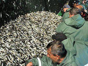 """Balıkçılar """"Vira Bismillah"""" dedi"""