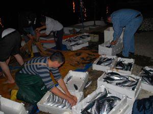 Balıkçılara büyük sürpriz