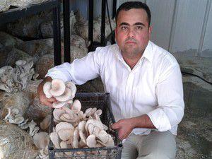 Kendi imkanıyla kurduğu tesiste mantar üretiyor
