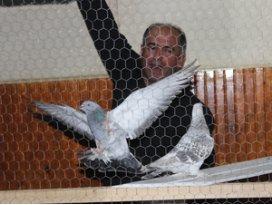 Mezata çıkarılan güvercinler havada kapışılıyor