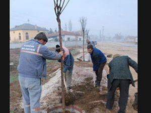 Karatay da ağaçlandırma çalışmaları sürüyor