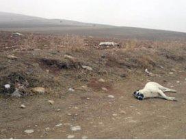 Ereğlide 20 köpek boş arazide ölü bulundu