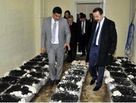 SÜ, Konya'nın mantar arşivini oluşturuyor
