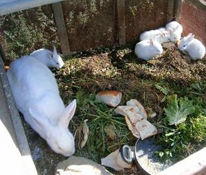 Aç kalan tavşanlara jandarma sahip çıktı