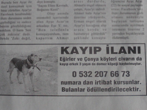 Kayıp köpeğini gazete ilanıyla arıyor