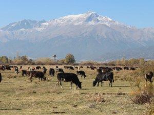 Beyşehirde 940 bin ton et üretimi gerçekleşti