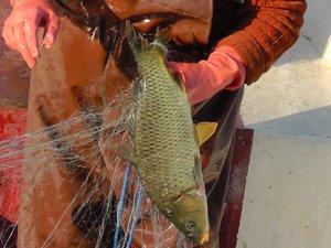 Beyşehir Gölü eski tür balıklarına yeniden kavuşuyor