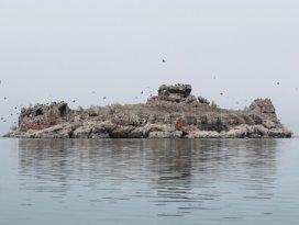 Beyşehir Gölünde 153 kuş türü yaşıyor