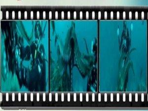 Dev ahtapotunun fotoğrafçı ile güreşi