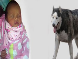 6 günlük bebeğin feci ölümü!