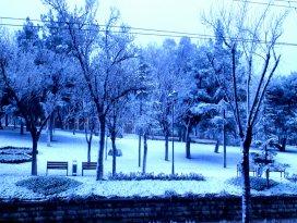 Meyve ağaçları tam da çiçek açmıştı kar bastırdı