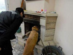 Konya da narkotik köpeği ile ev araması